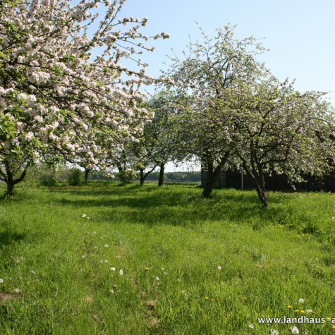 Apfelblüte auf dem Grundstück